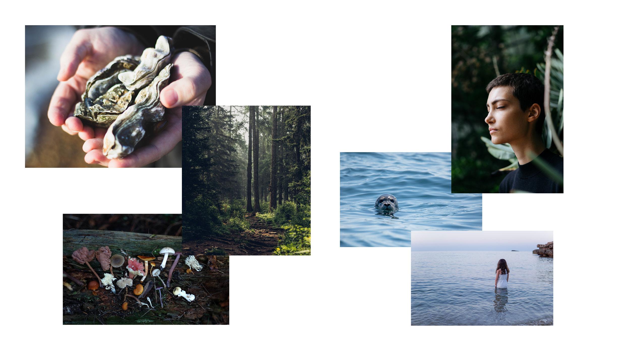 Rewilding retreat images2.jpg