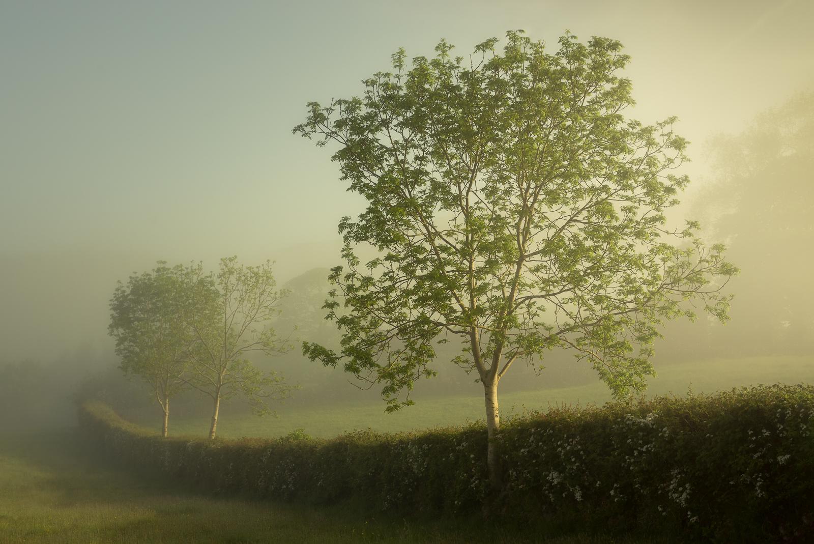 Green Tree framed.jpg