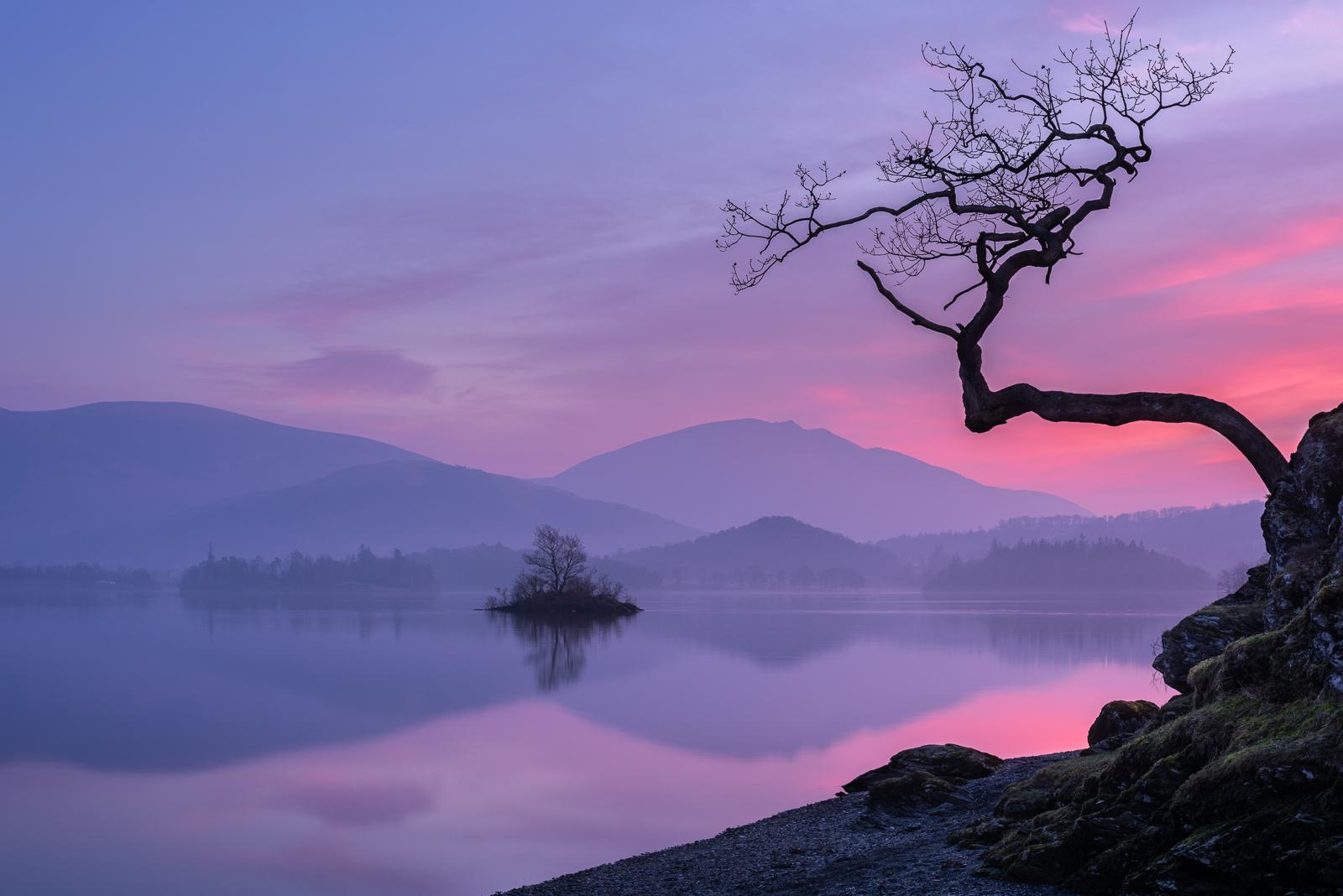 Otterbield tree.jpg
