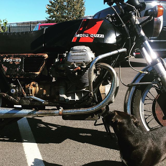 """Checkout this lovely old 750 S3 Moto Guzzi """"Barnfind"""" I tracked it down last week. Been sitting for 16 years so  I can't wait to start a sympathetic resto 🔧🏍"""