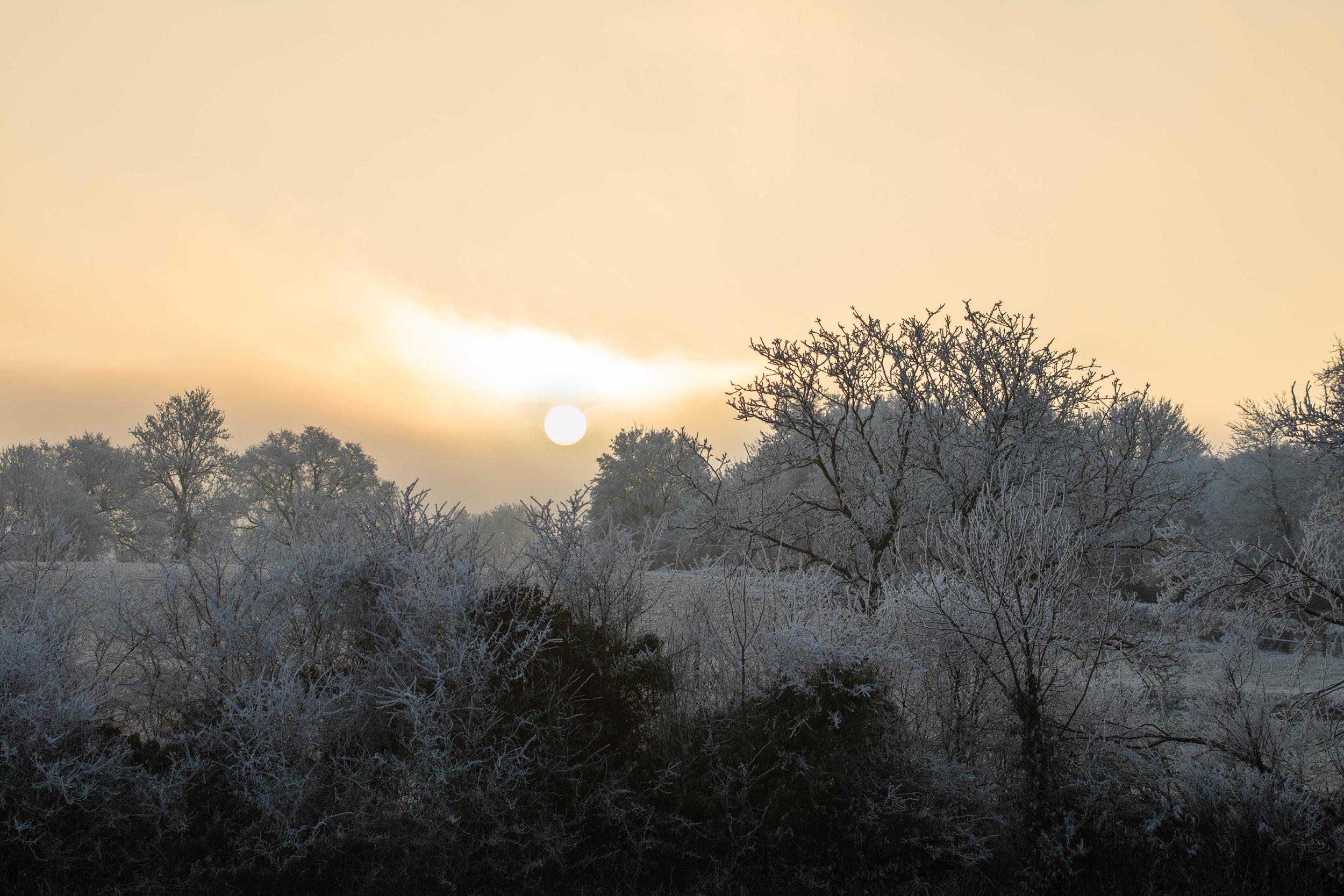 Winter In Burgundy