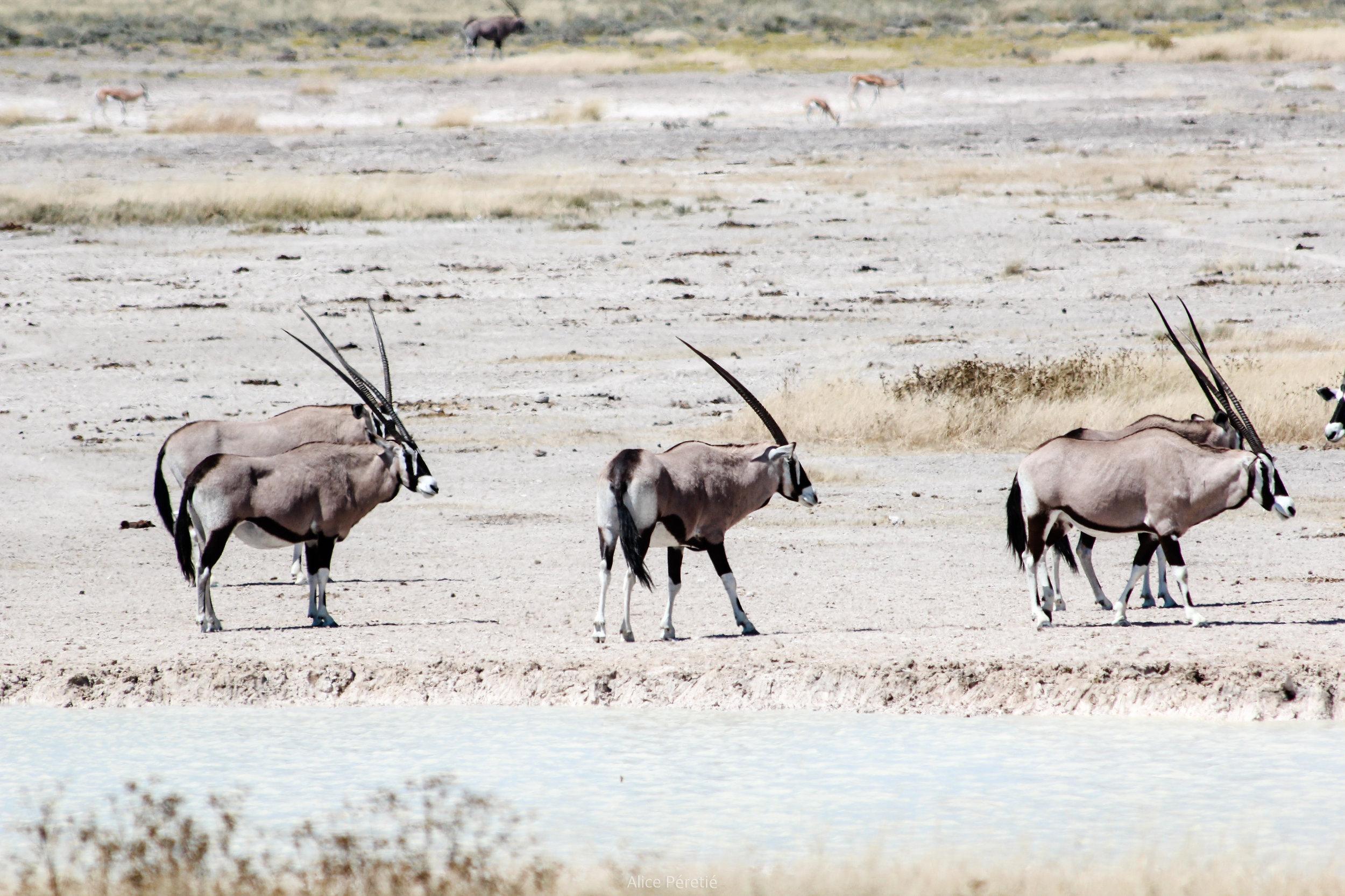 Namibie 2012 (148).jpg