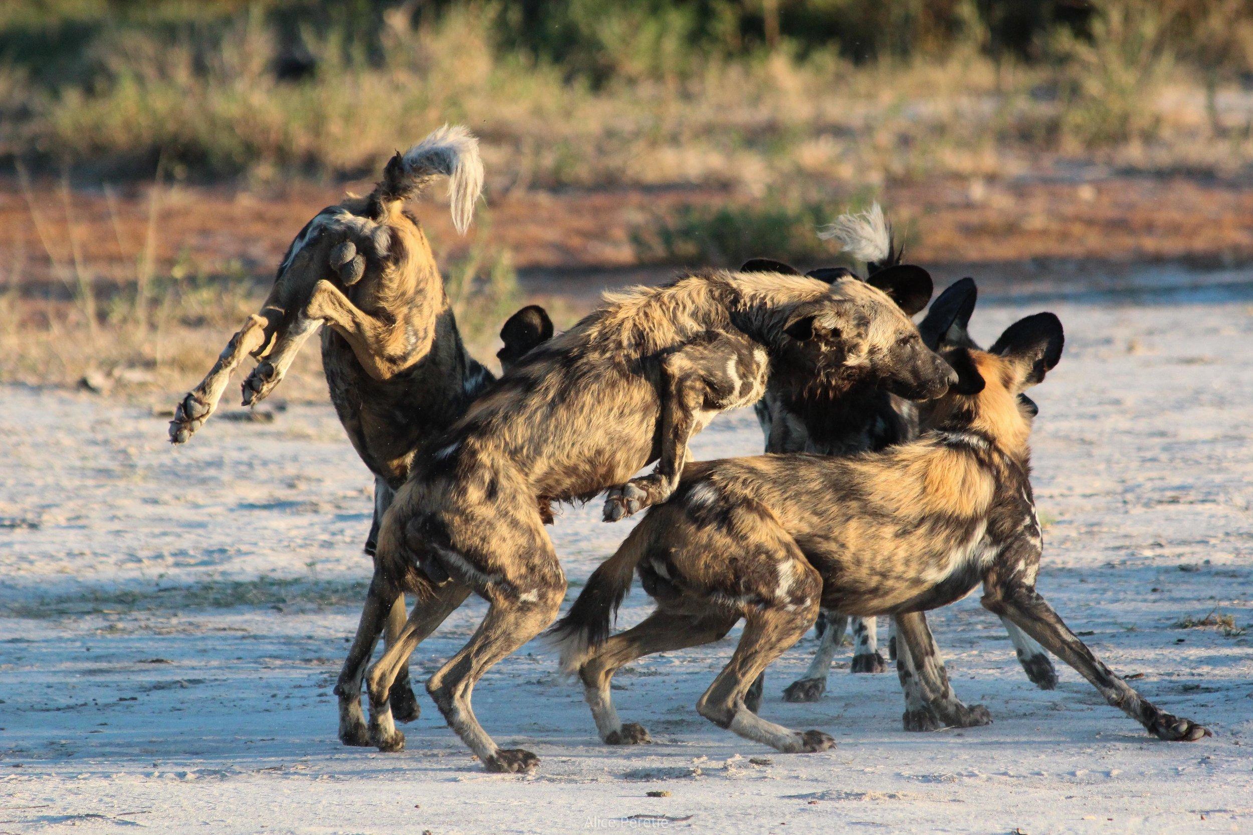 Botswana 2012 (188).jpg