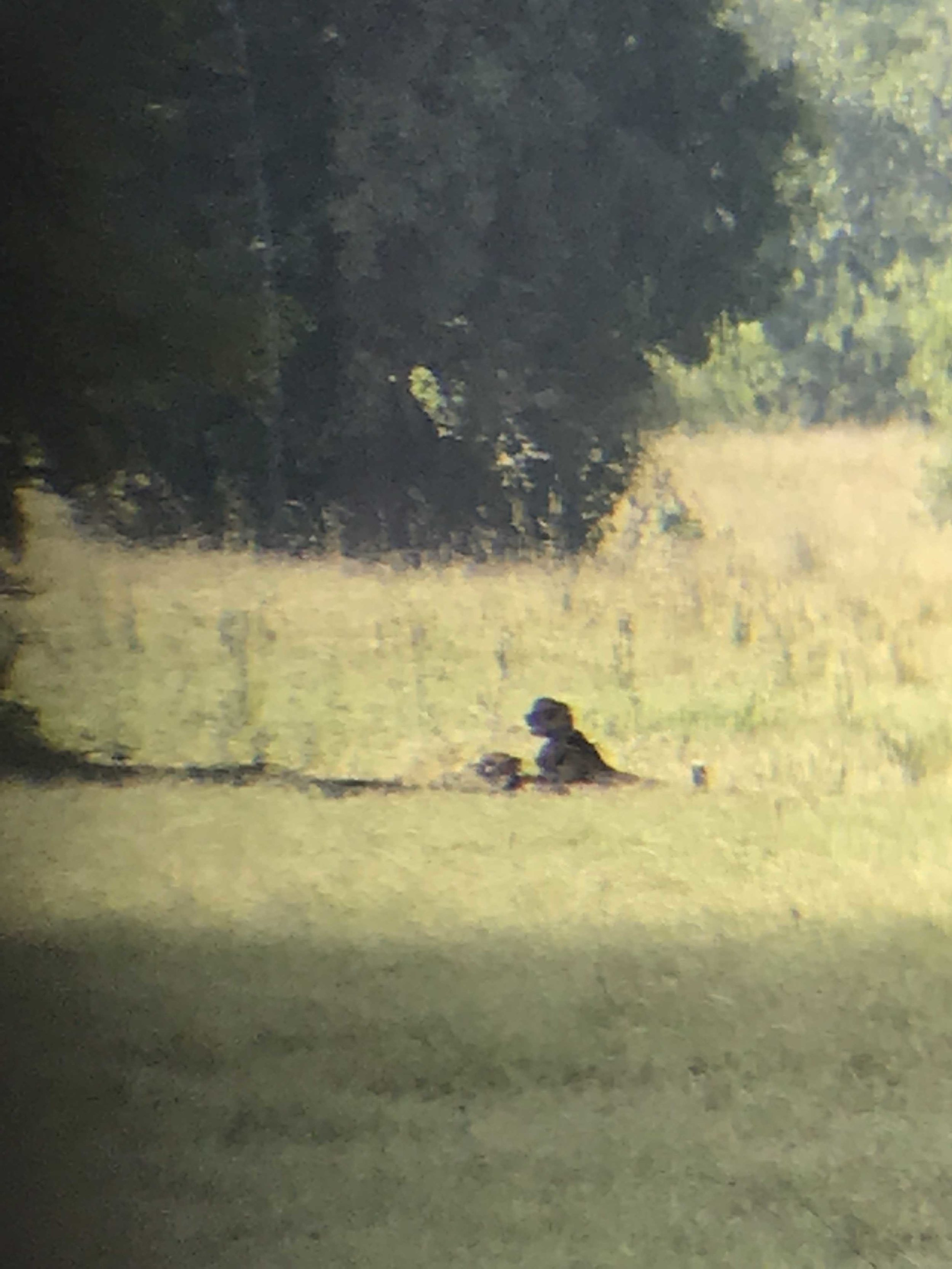 the cheetahs - iPhone pic X binoculars for top notch quality