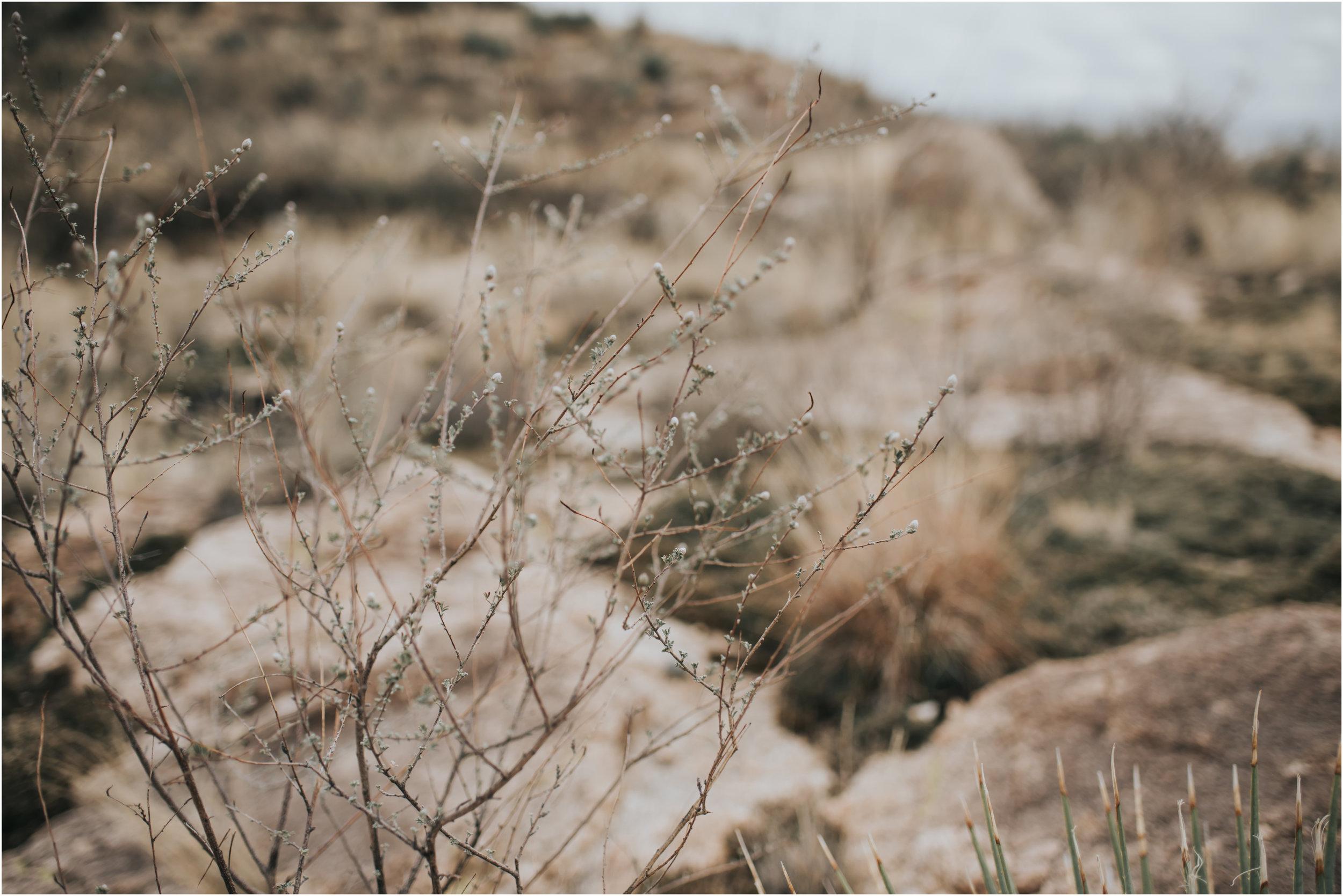 starks blog post 1-11.jpg