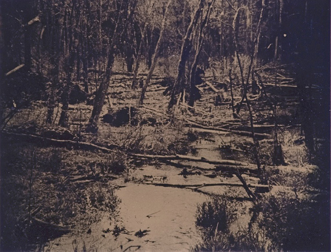 """Wetlands 2 revisited""  tintype 12"" x 15"""