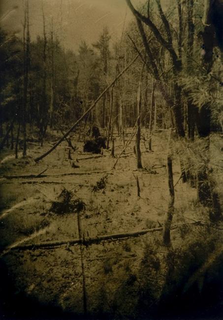 """""""Wetlands 6"""" tintype 12"""" x 15"""""""