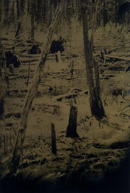 """""""Wetlands 7"""" tintype 12"""" x 15"""""""