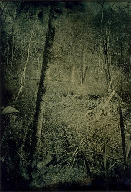 """""""Wetlands 16"""" tintype 12"""" x 15"""""""
