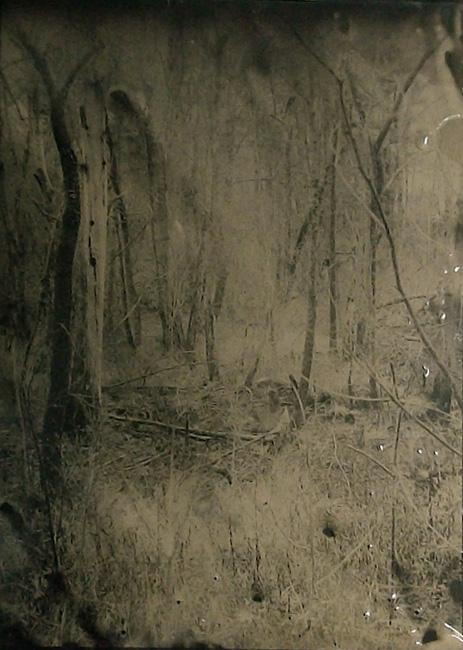 """""""Wetlands 14"""" tintype 12"""" x 15"""""""