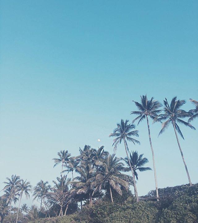 💦 AL🌕HA FRIDAY 🌴 #museroom #kailua #hawaii