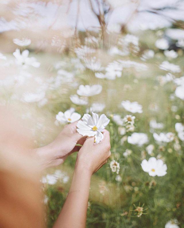 I must have flowers, always, always. 🌸🌸🌸🌸🌸 #hawaii #oahu #photooftheday #flower #white dress #luckyweliveinhi #waikiki #pinkpalace #beach #waikiki #maxidress #resort #offtheshoulder #musebyrimo #ハワイ #ワイキキ