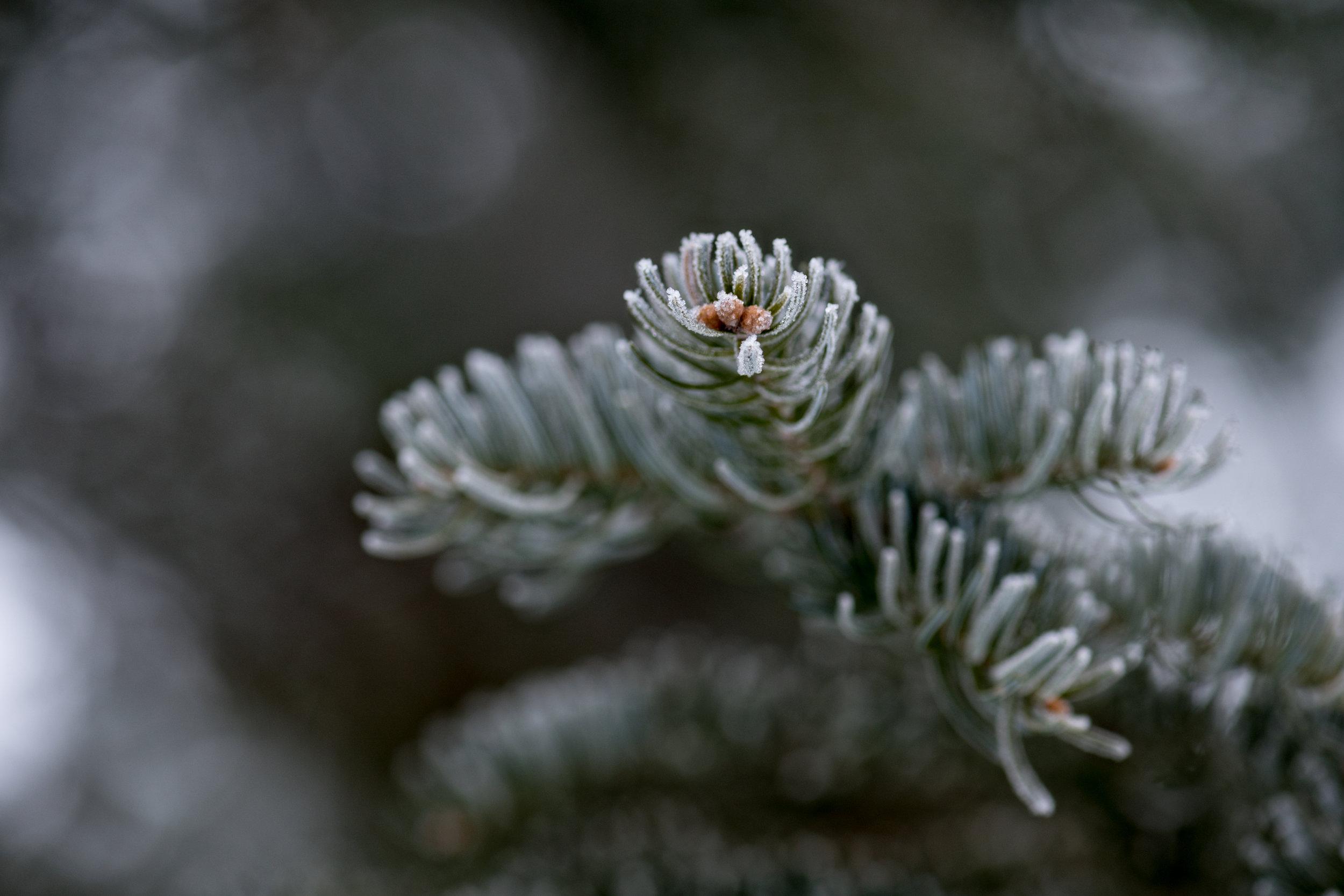 Winter2018-1.jpg