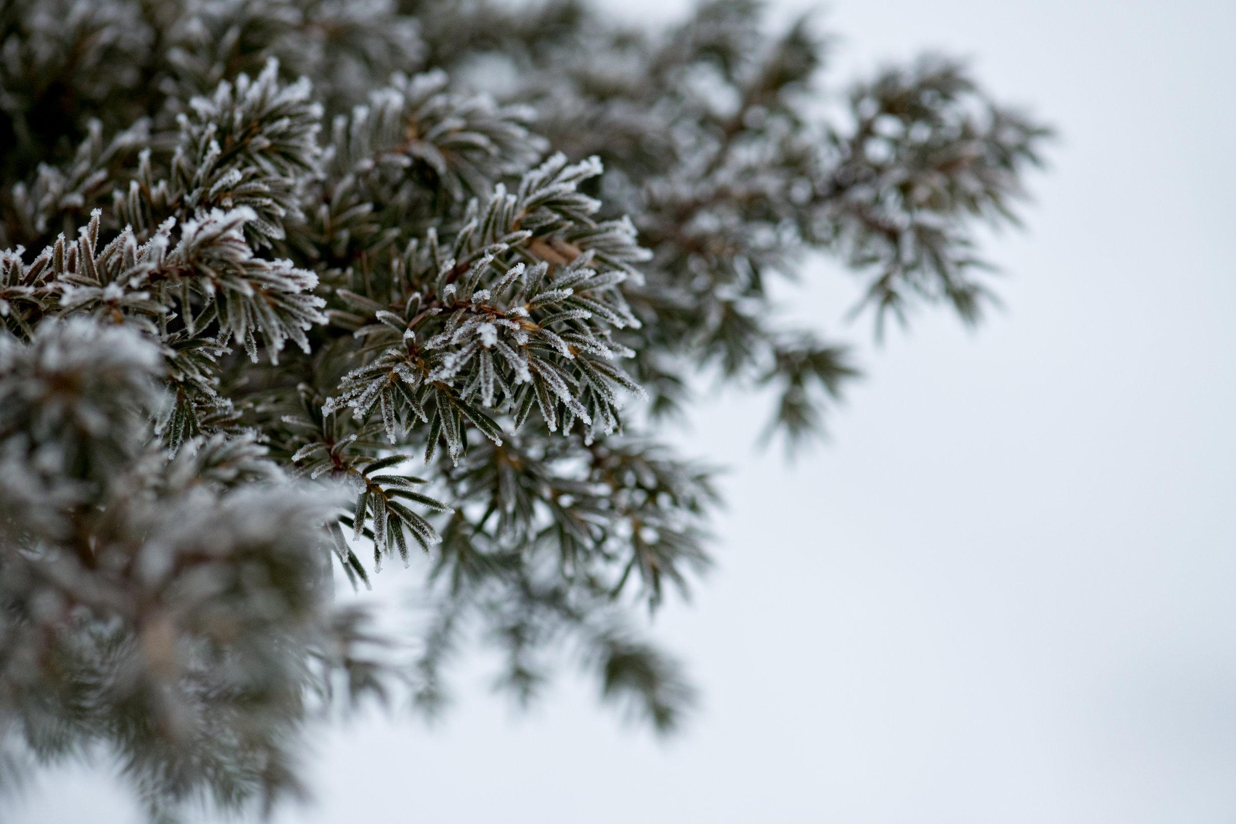 Winter2018-5.jpg