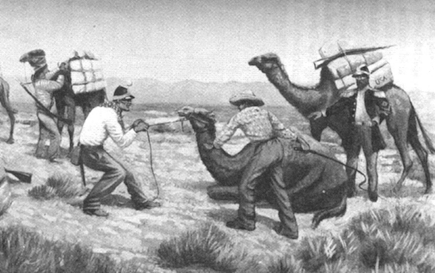 Jefferson Davis theorized that camels could be used to chase the Comanches and other native Americans because of their ability to survive in the desert.