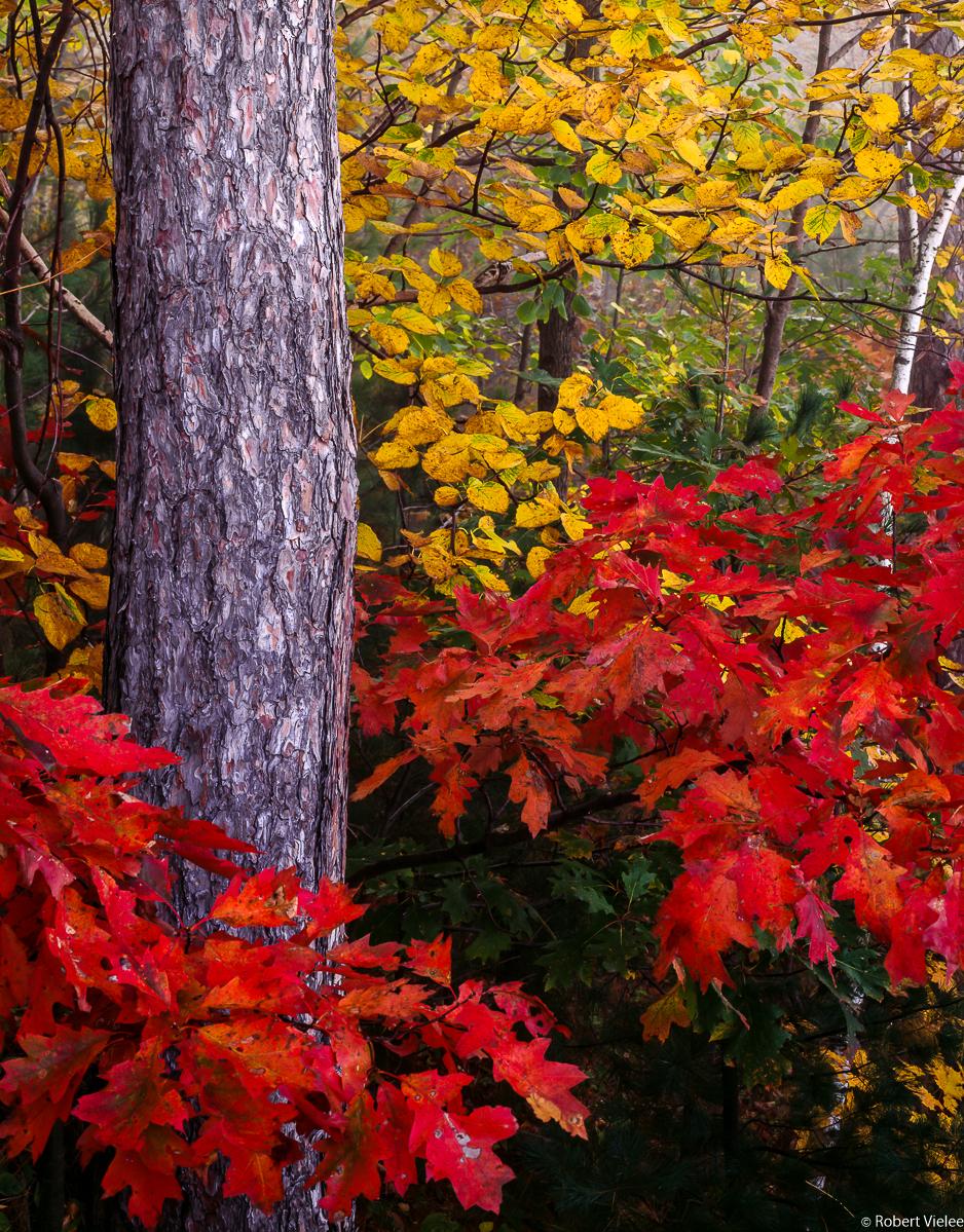 Red Oak & Elm