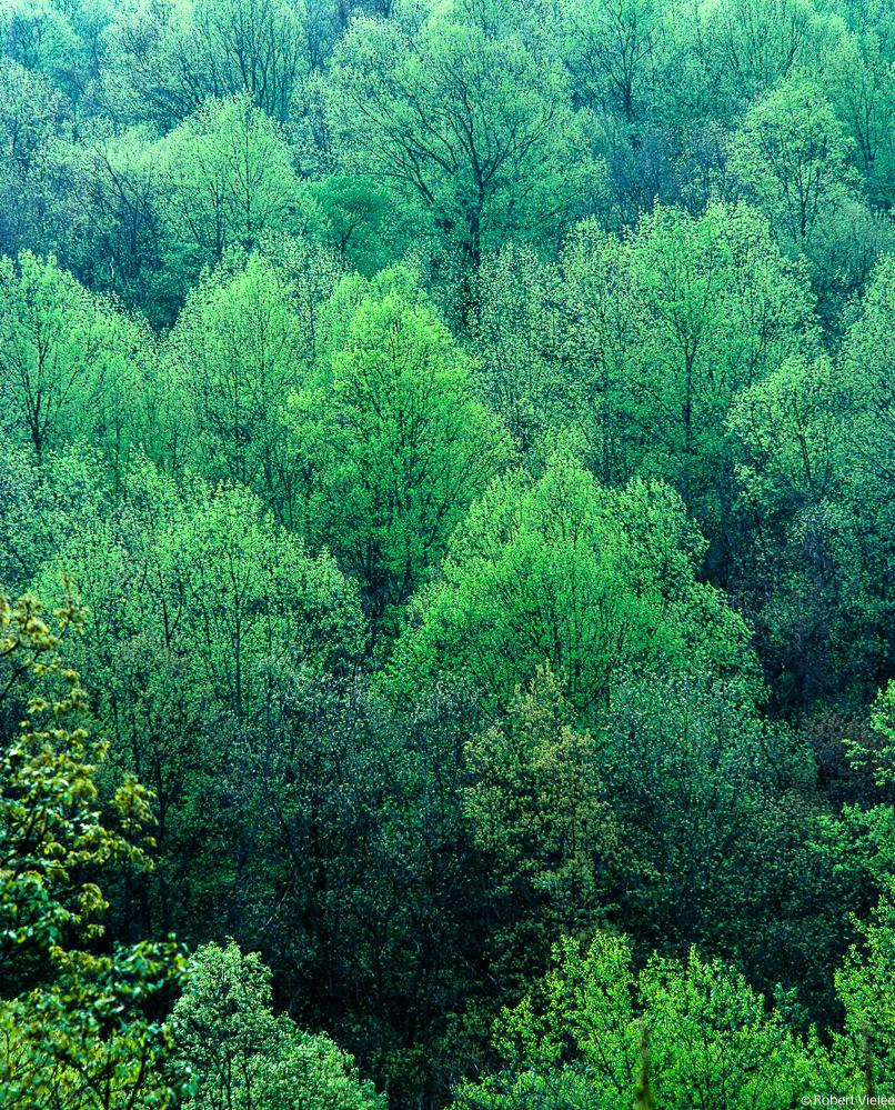 Forest, Spring Renewal