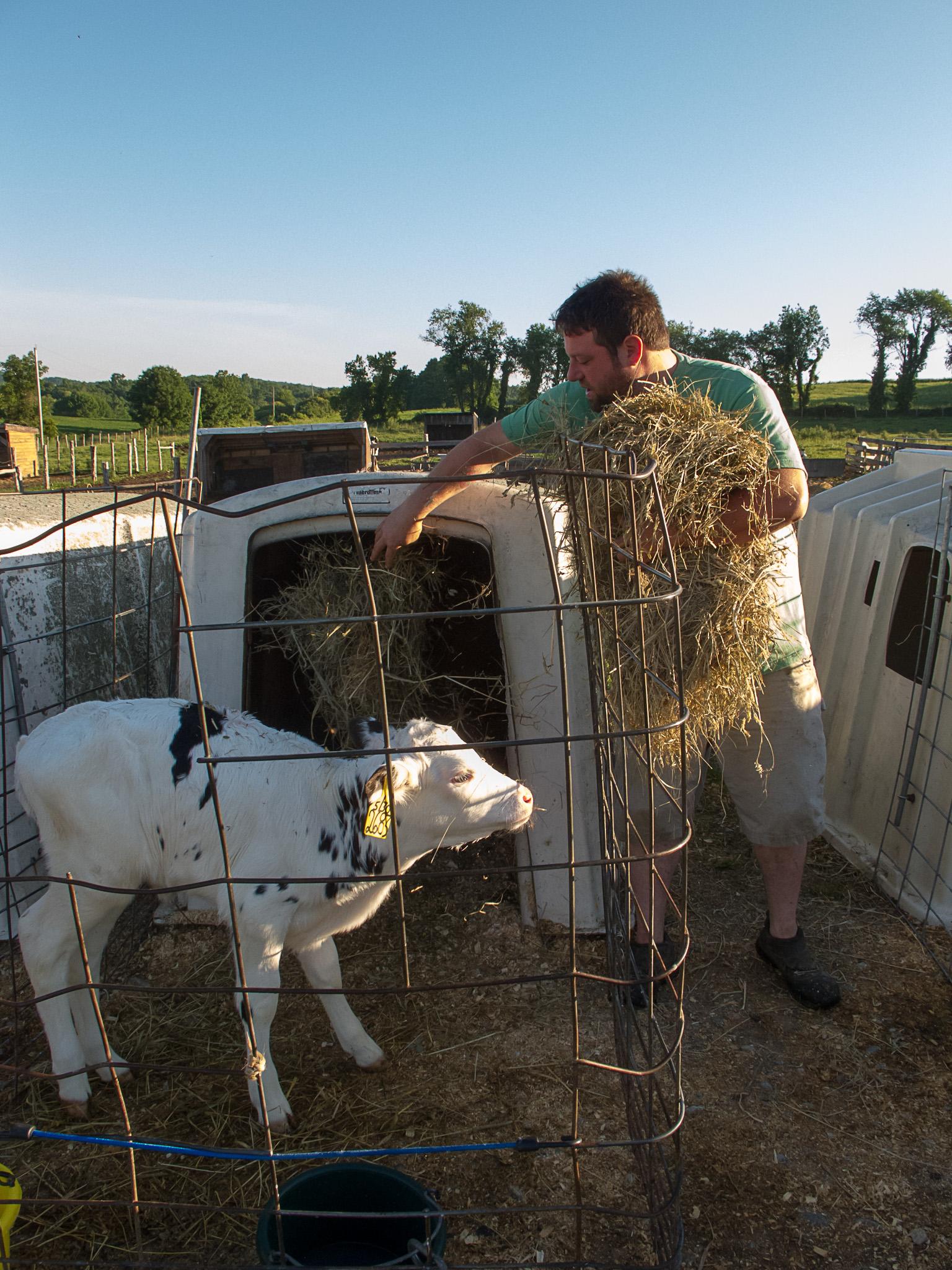 Dan fills a calf's hatch with fresh hay.