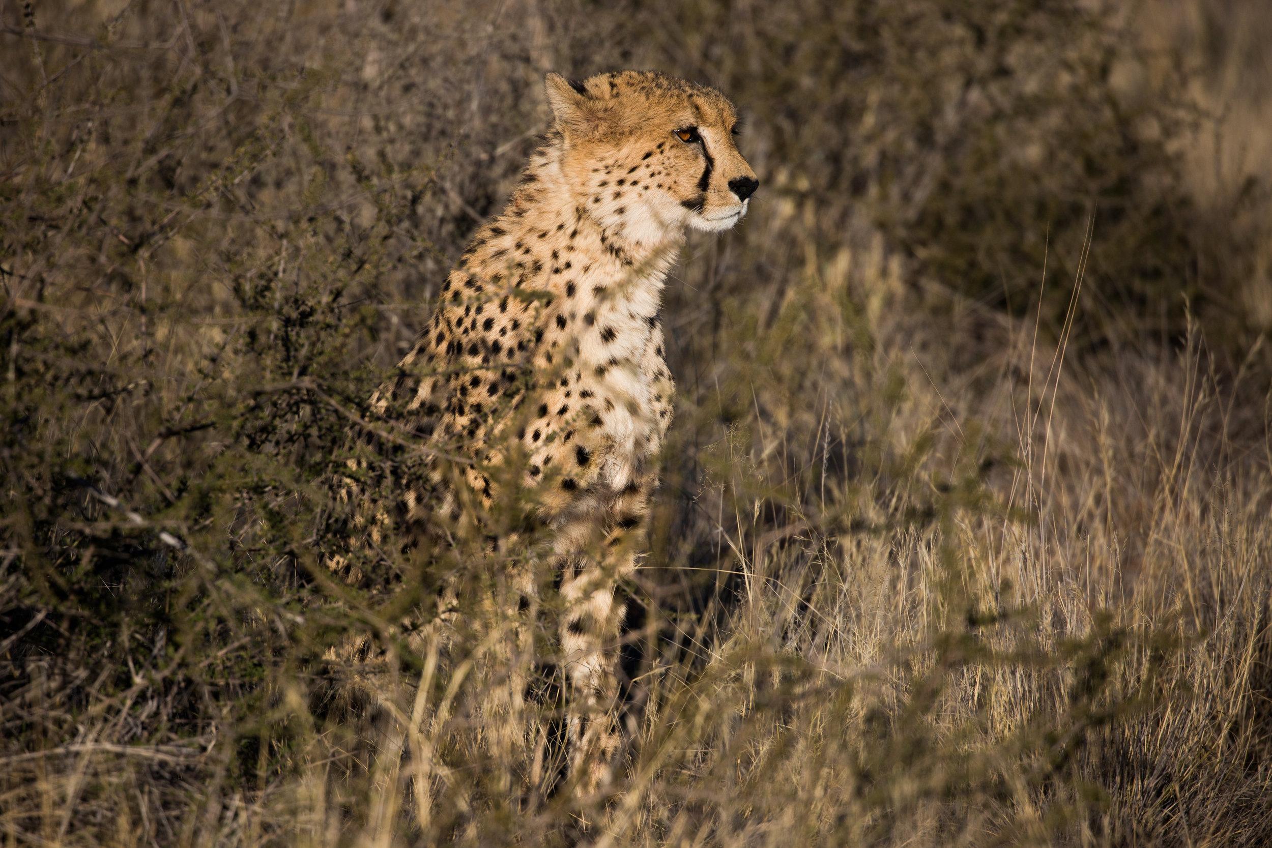 FM_Partnership_ResponsibleSourcing_Website_CheetahImage.jpg