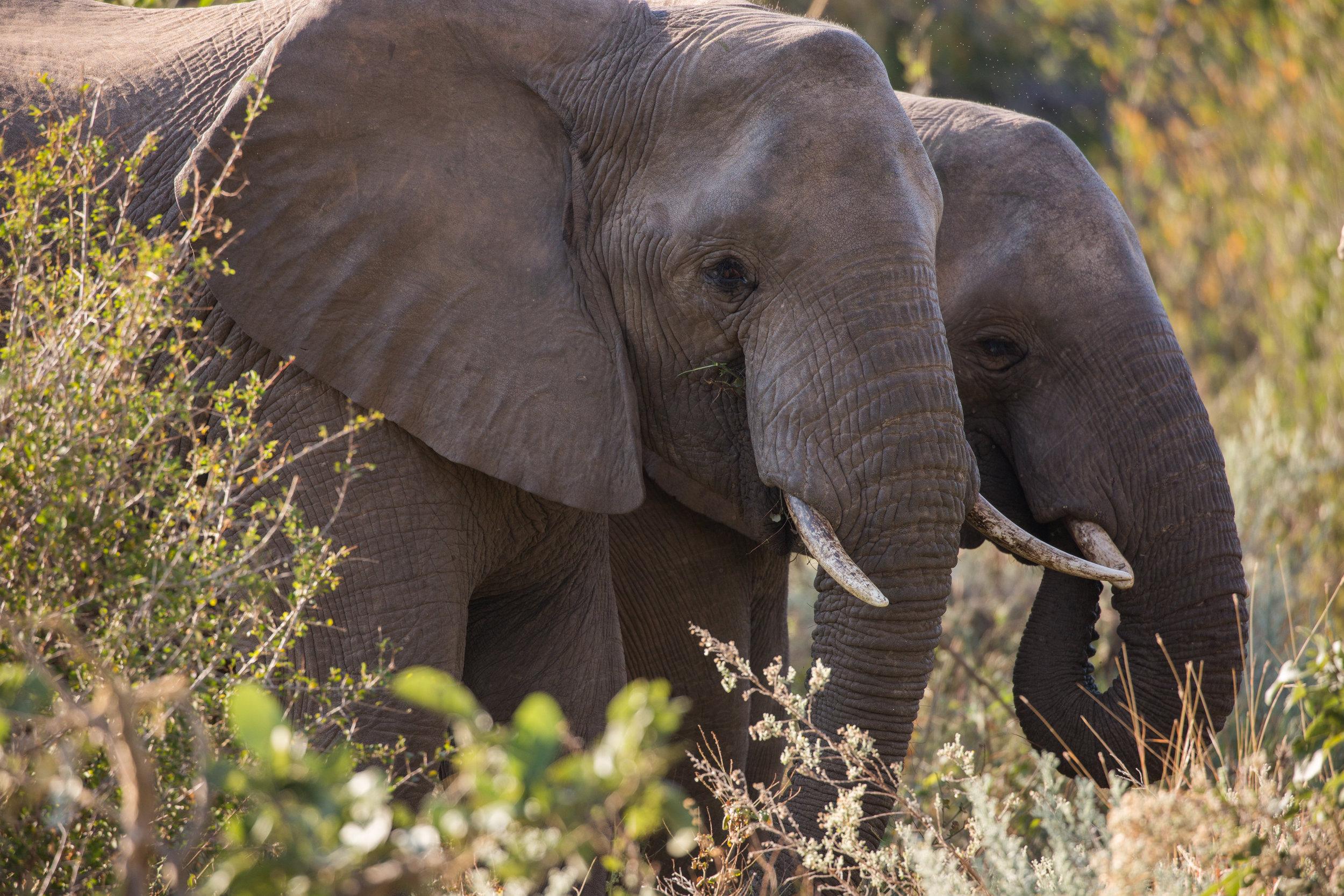 FM_Partnership_ResponsibleSourcing_Website_ElephantImage.jpg