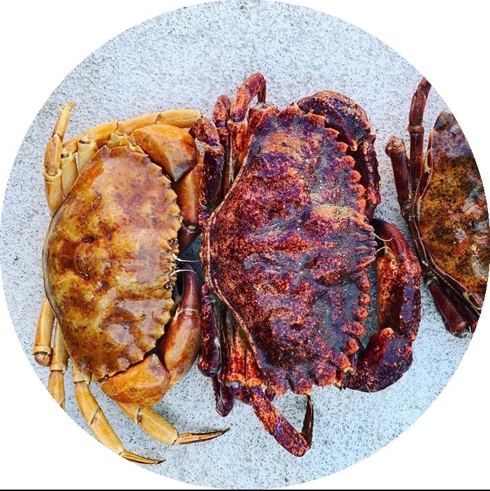 rock crab.png