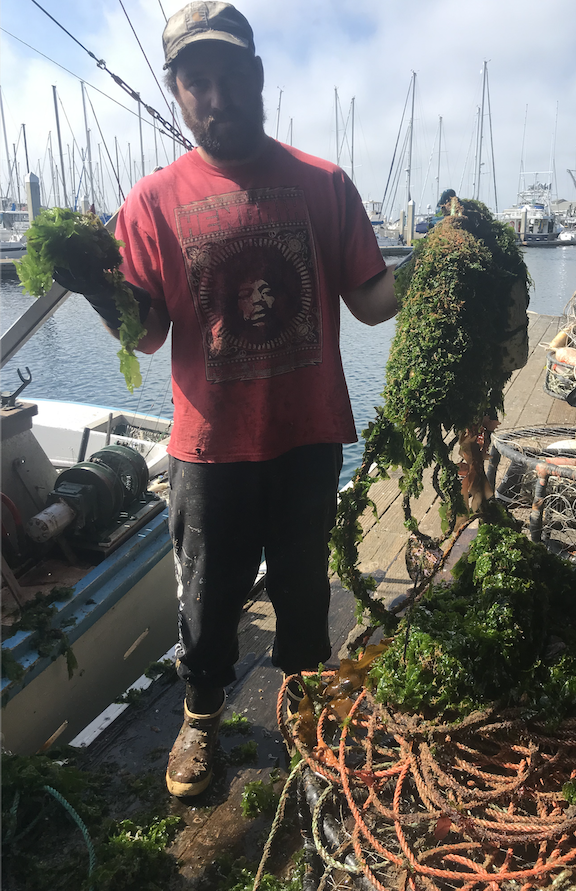 Skylar Campbell, F/V Sable with an overgrown crab trap he recovered. Buoys and rope are ideal substrates for algae and small invertebrates to attach too. From the surface it can become a navigational hazard, as it is challenging to identify from a distance.