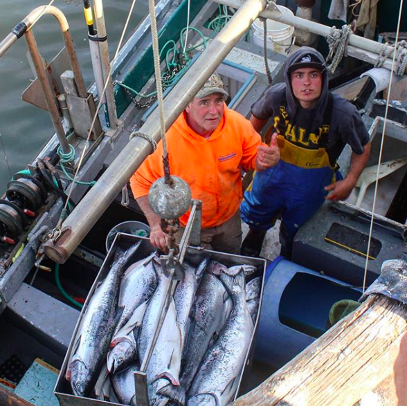 Frankie Cunningham (F/V - Krazy Kate), Santa Cruz fisherman, and crew offloading a haul of King salmon.