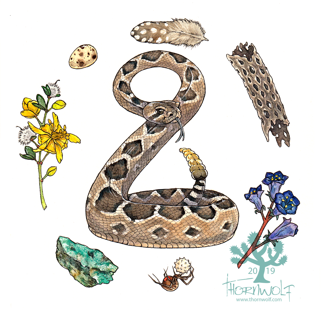 Western diamondback rattlesnake with quail feather and egg, creosote bush, copper ore, brown widow spider, desert Canterbury bells, and cholla cactus skeleton.
