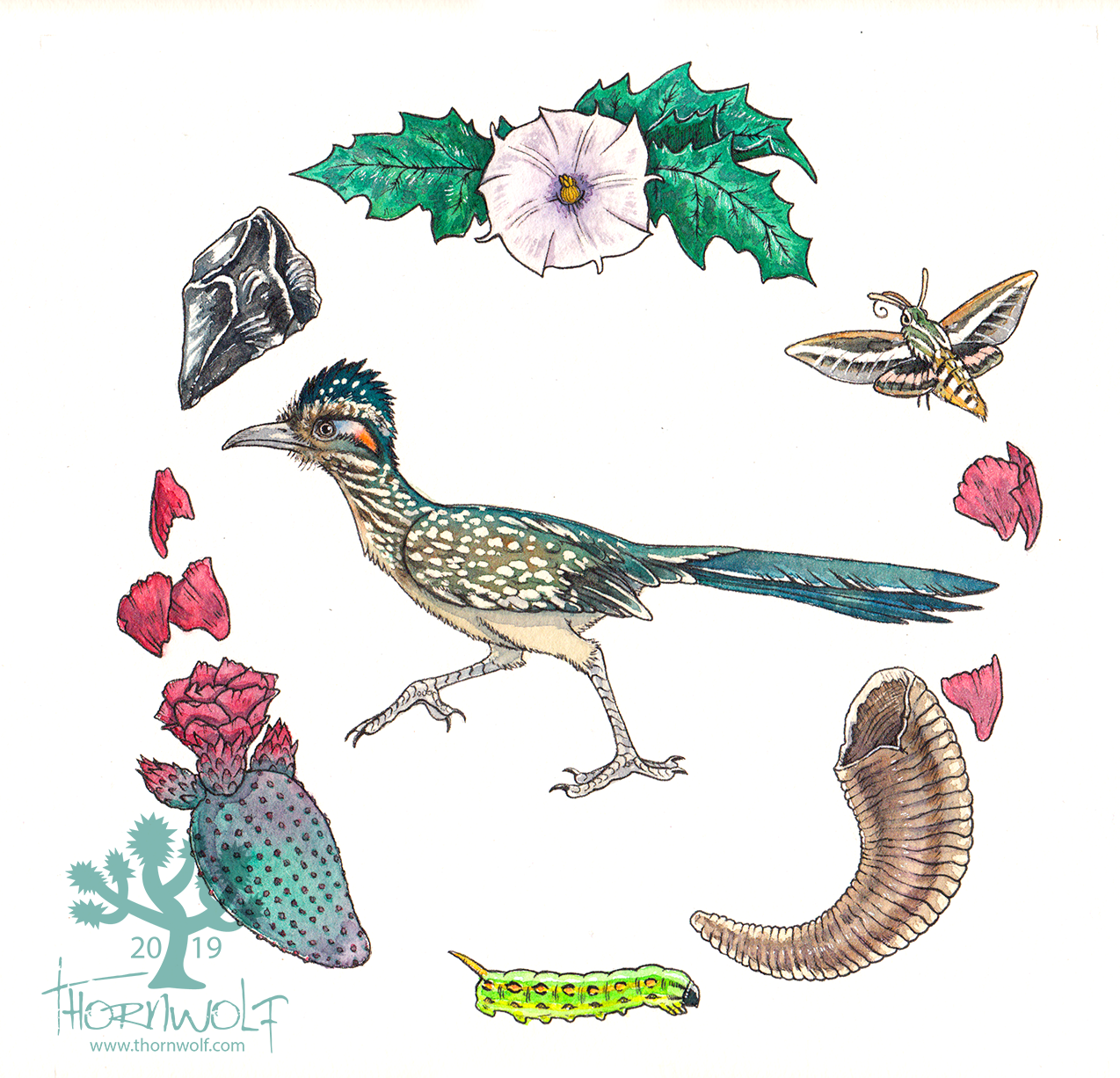 Roadrunner with jimsonweed, obsidian, beavertail cactus, sphinx moth caterpillar and adult, and bighorn sheep horn.