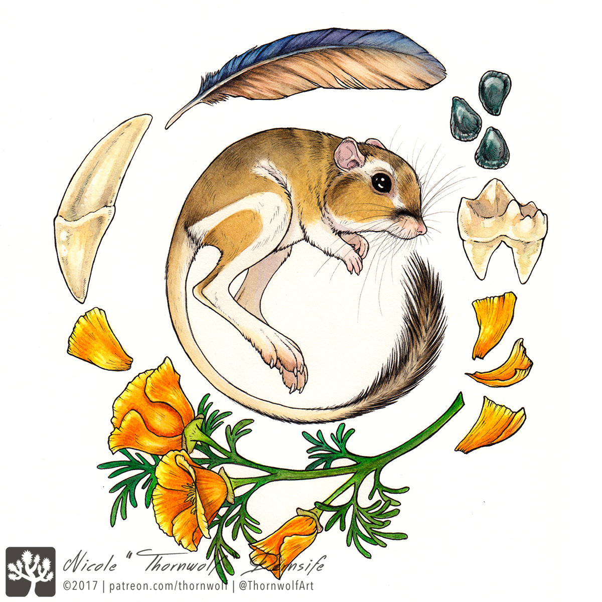 Kangaroo rat surrounded by scrub jay feather, coyote teeth, yucca seeds, and California golden poppies.