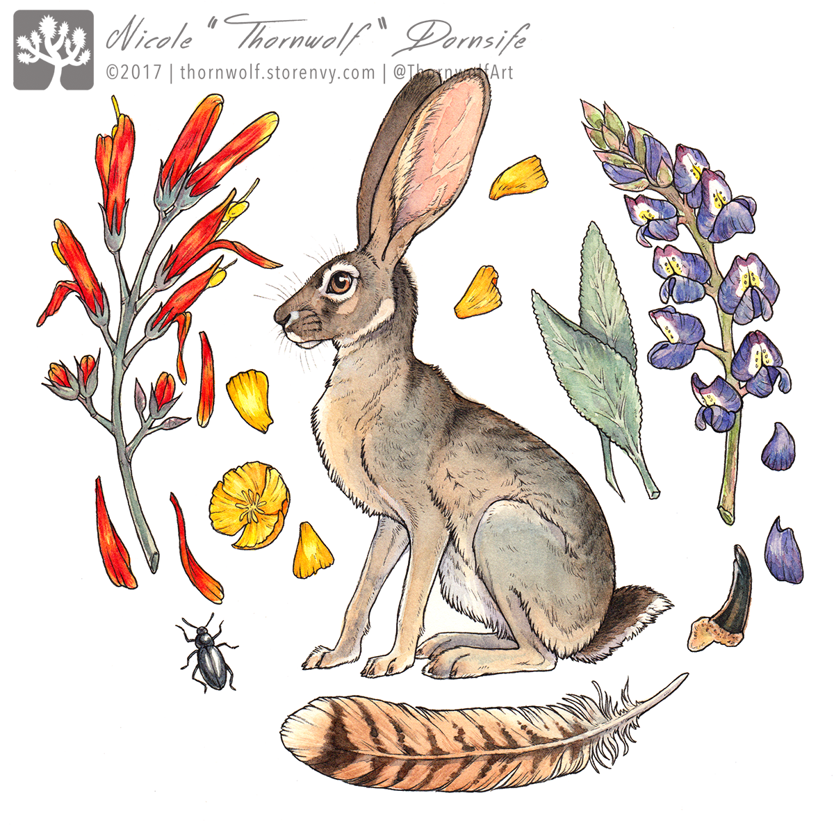 Jackrabbit surrounded by chuparosa, desert lupine, white sage, California golden poppies, coyote claw, and red tailed hawk feather.