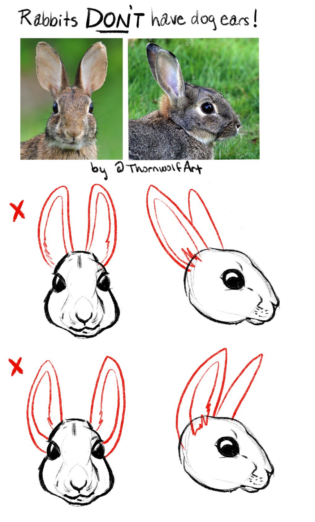 Even if they don't look like dog ears to you, they sure as heck aren't rabbit ears!