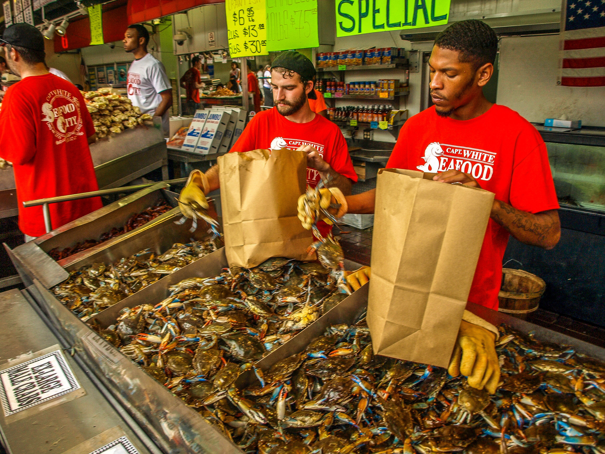 Fresh Live Crabs at Maine Ave. Fish Market