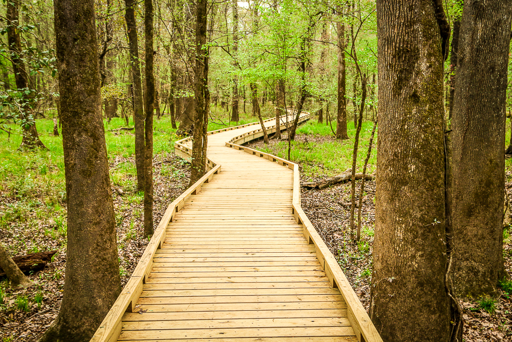 Hiking the Well Maintained Boardwalk