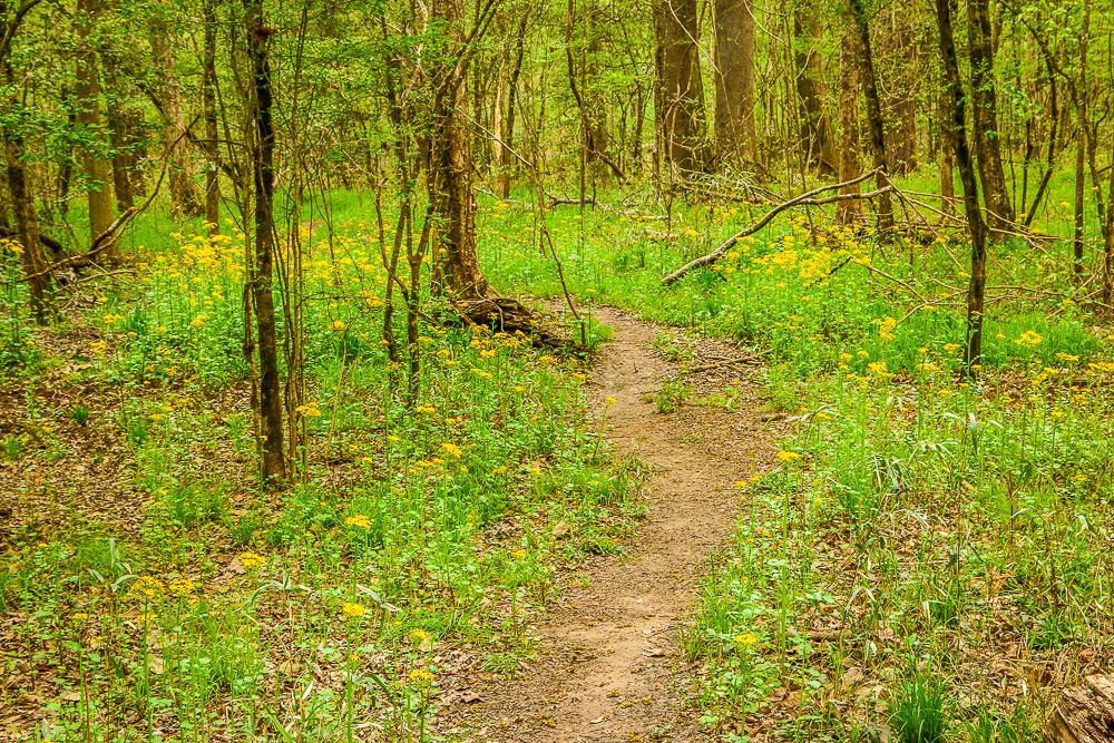 The Oakridge Trail - Far Fewer People