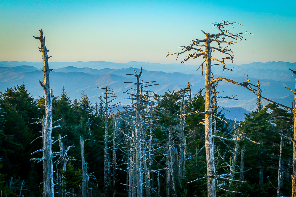 Sunrise Touches the Trees on Clingmans Dome