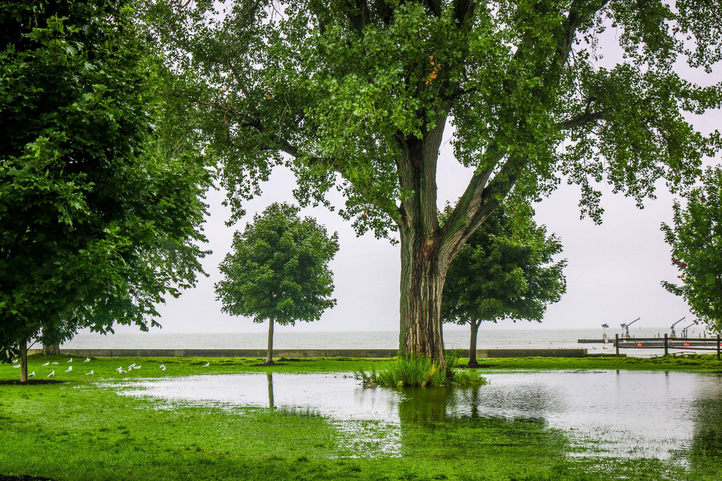 Rain Made a Lake