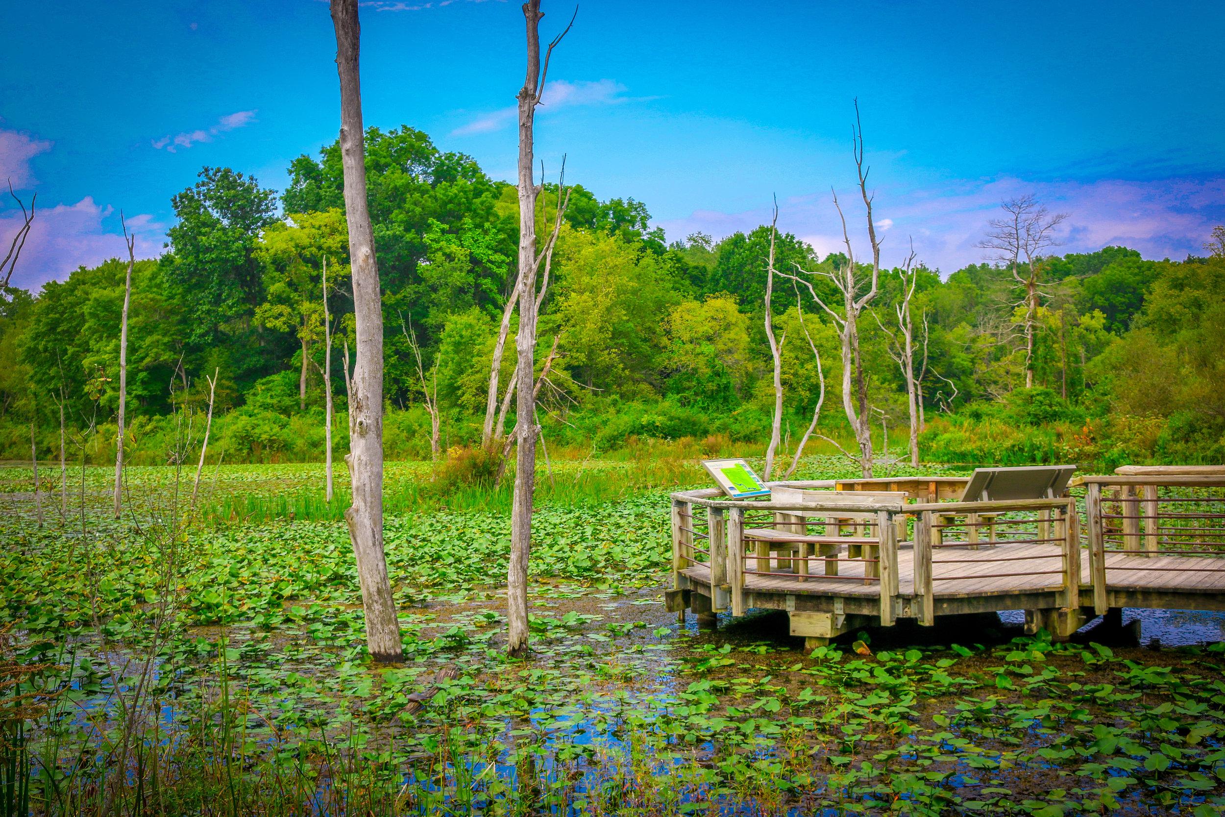 cuyahoga valley national park ohio oh nps beaver wetland