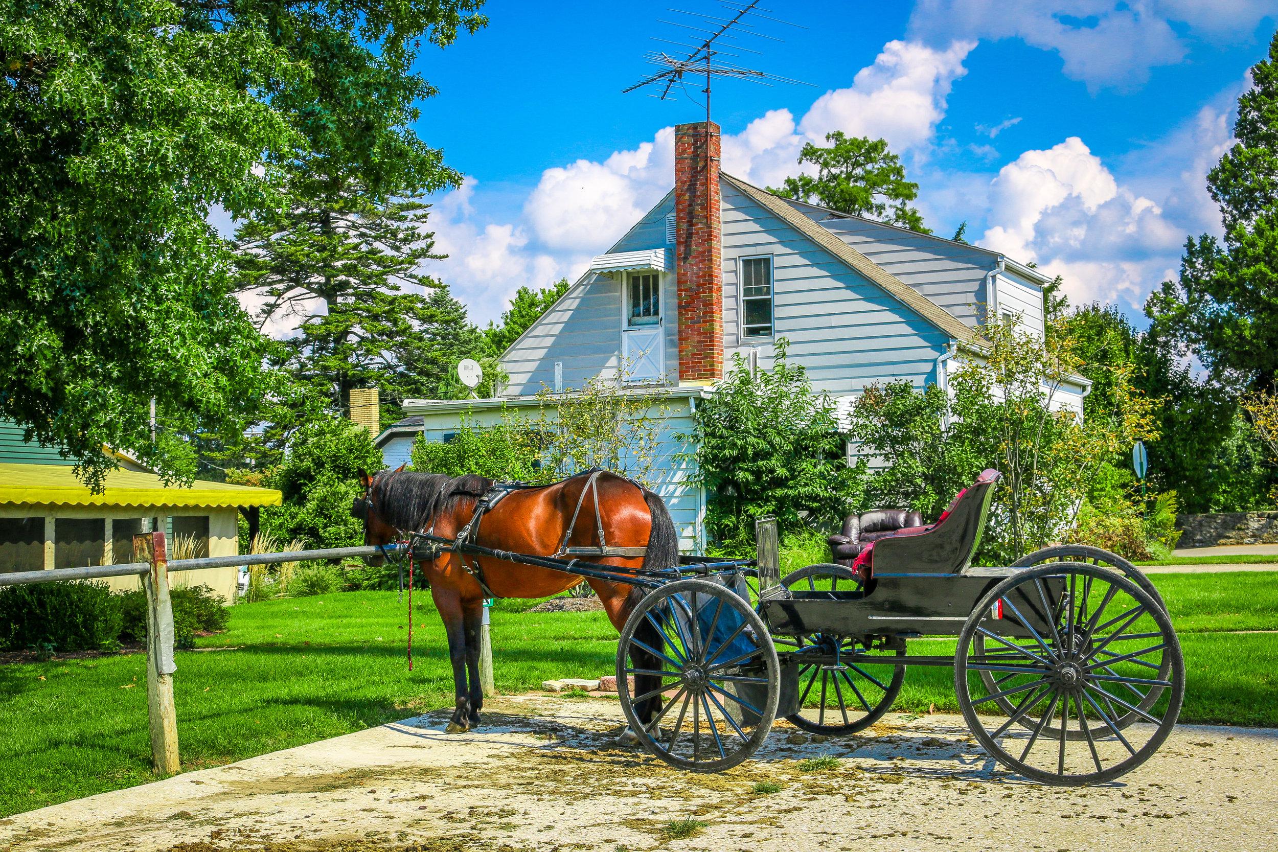 Amish cart and horse Ohio