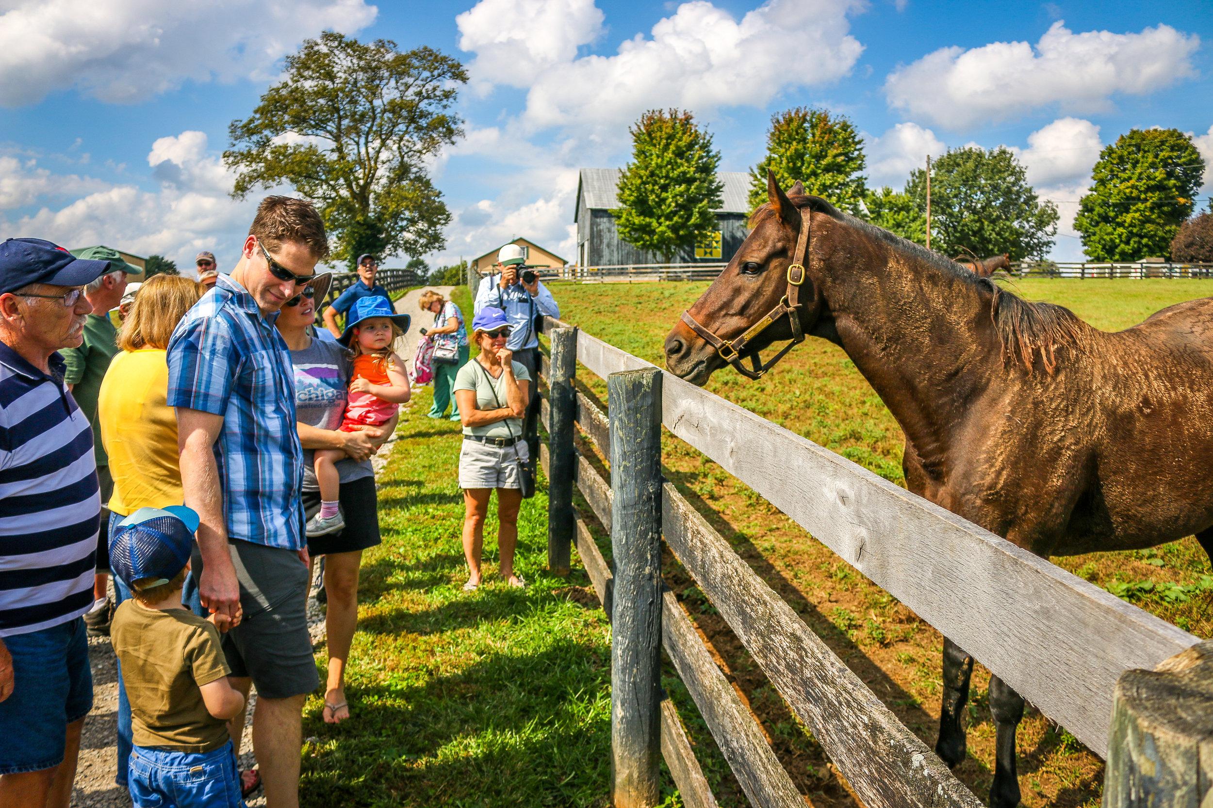 old friends horse farm lexington georgetown kentucky