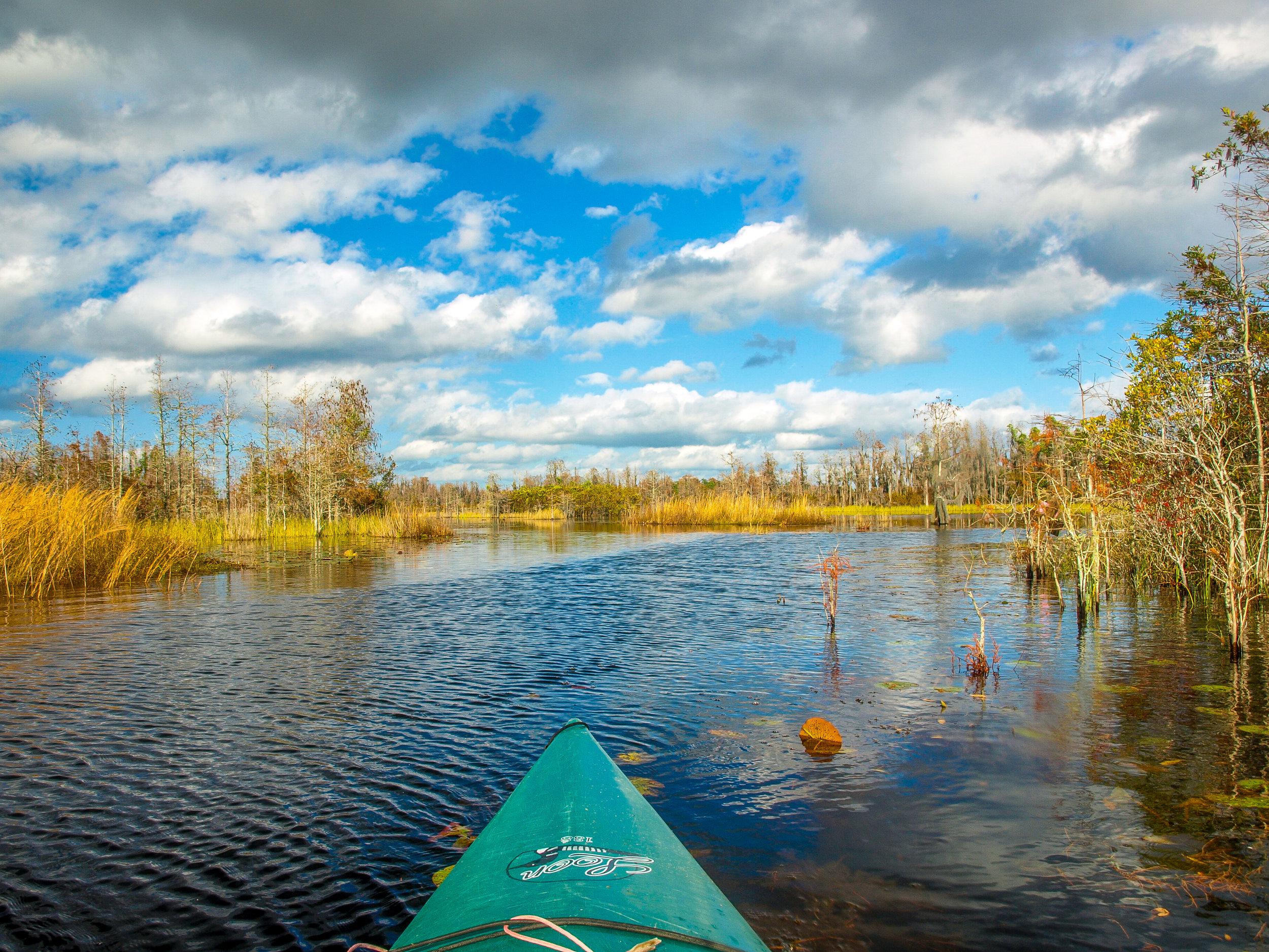 Kayaking in the Okefenokee Swamp