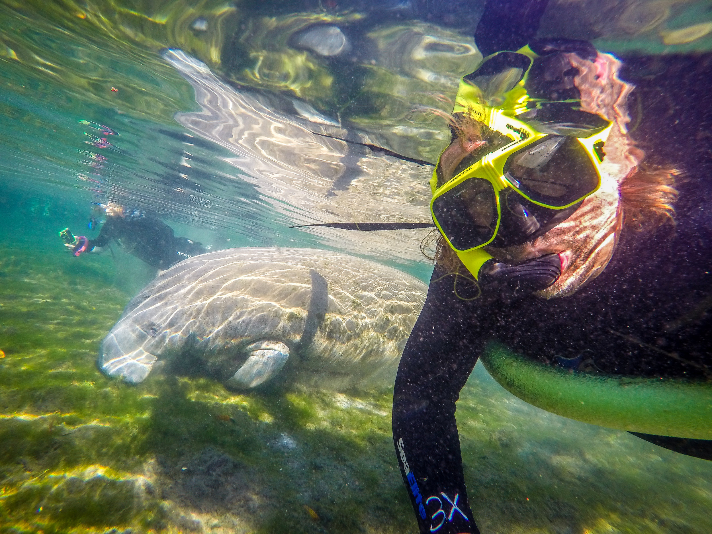 snorkeling with manatee crystal river florida FL