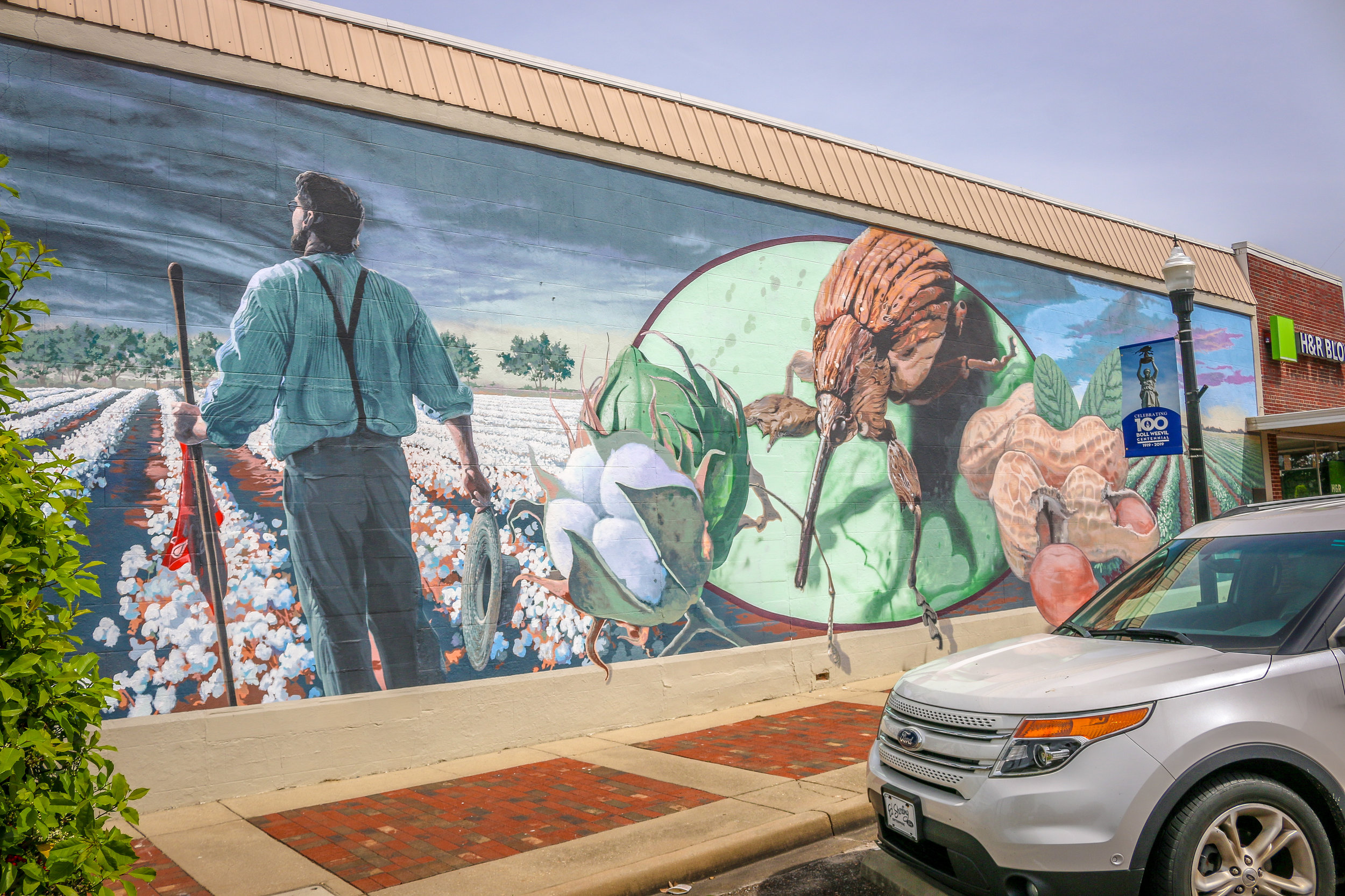 Boll Weevil Mural (Weevil Not to Scale)