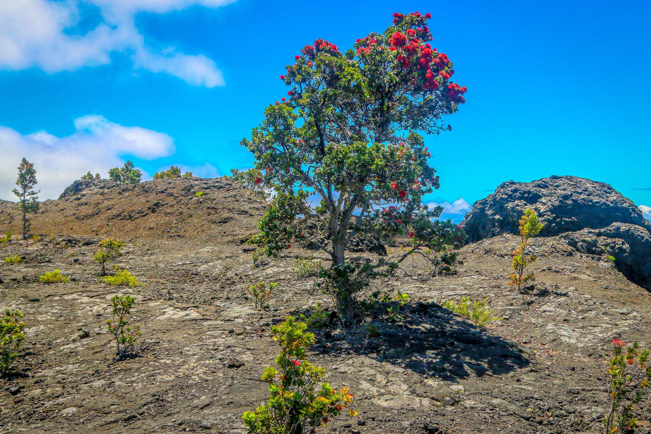 Amazing Volcanic Landscape