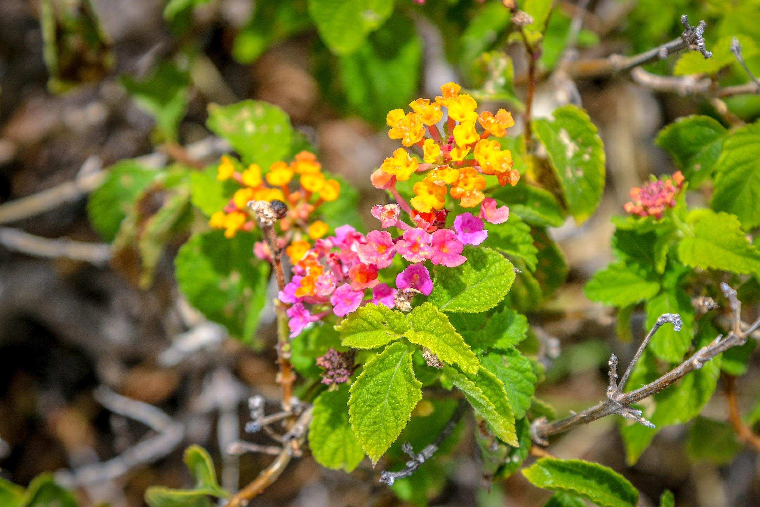 Hawaii HI Big Island Photos Photography flowers