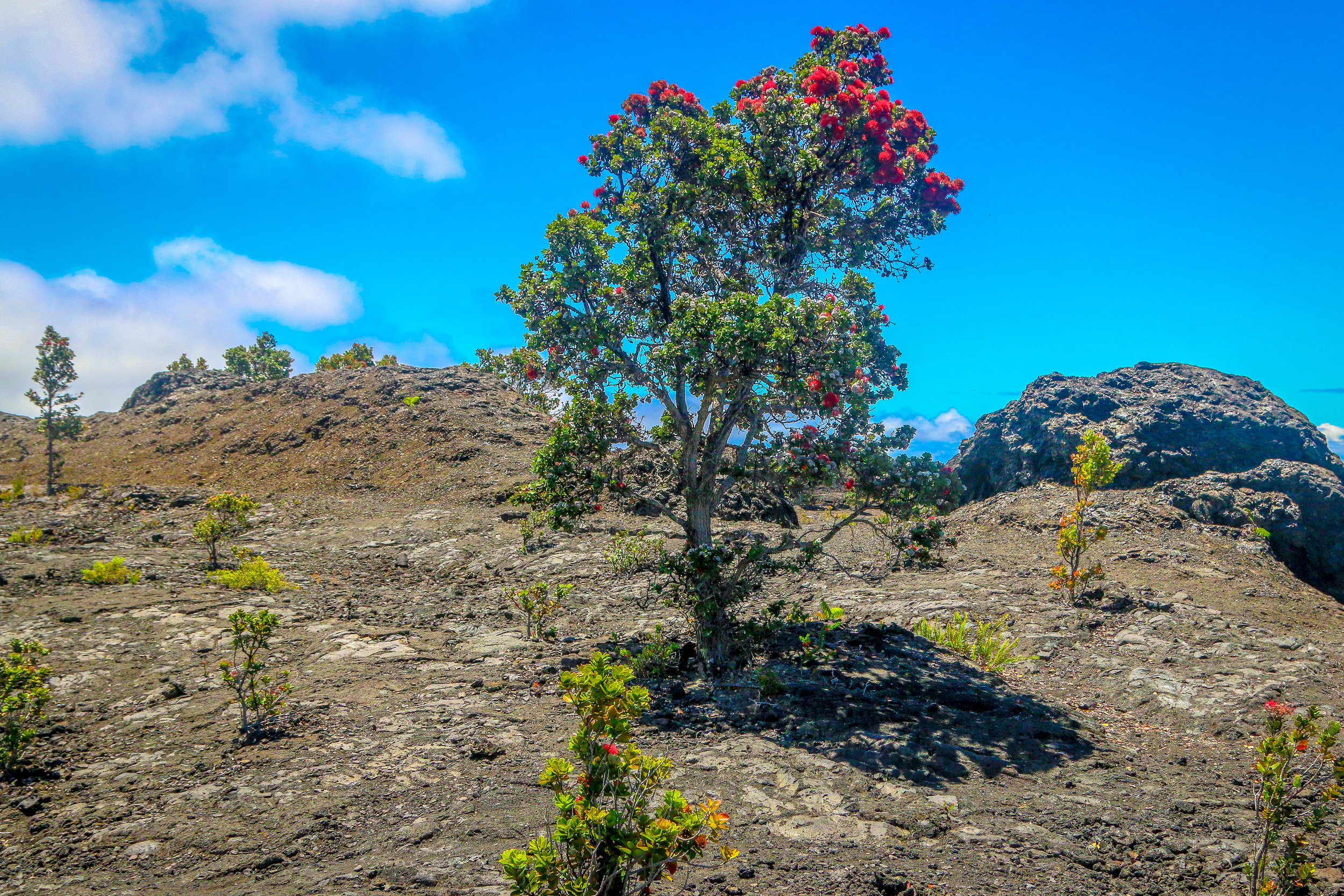 Hawaii HI Big Island Photos Photography volcano National Park