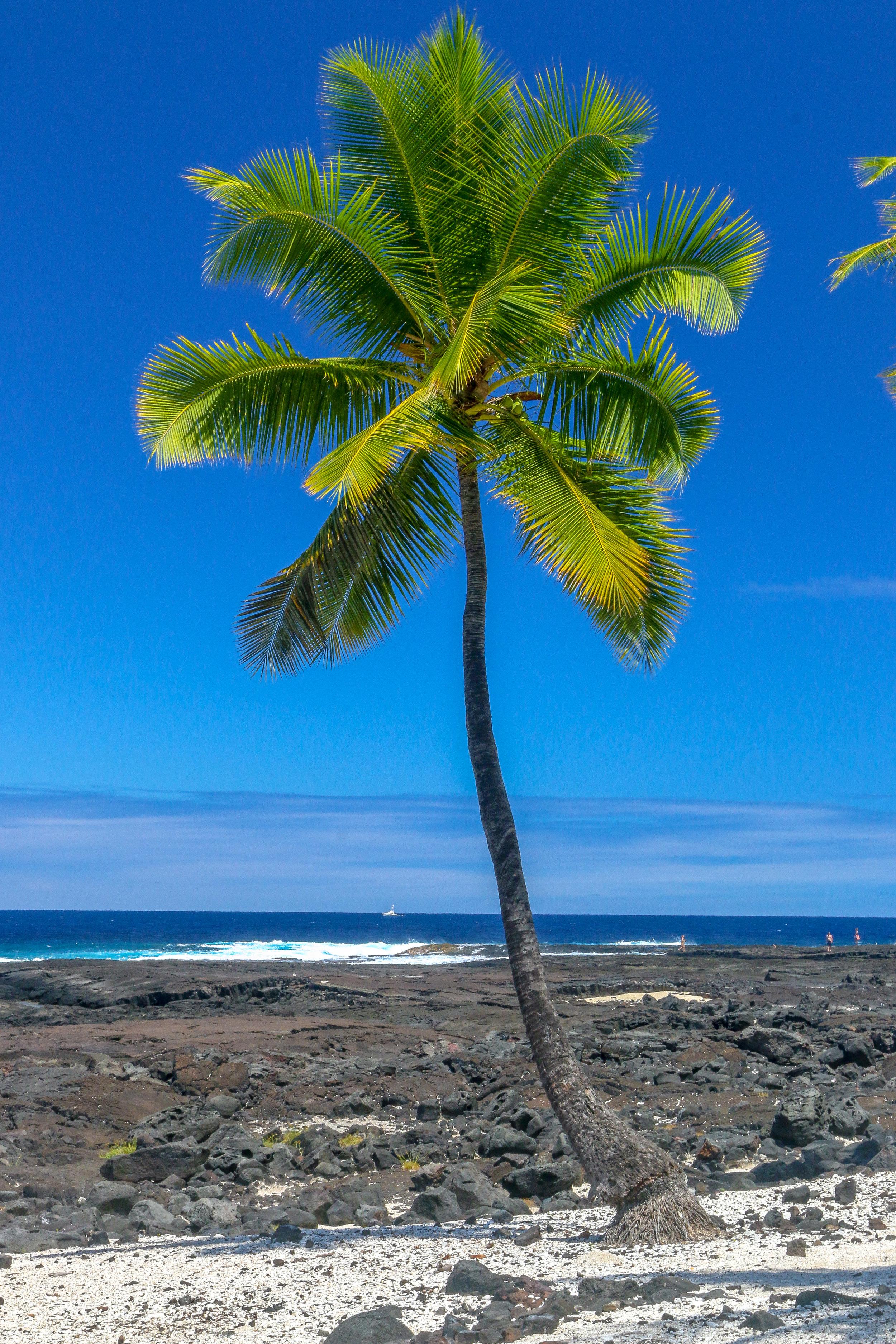 Hawaii HI Big Island Photos Photography perfect palm tree