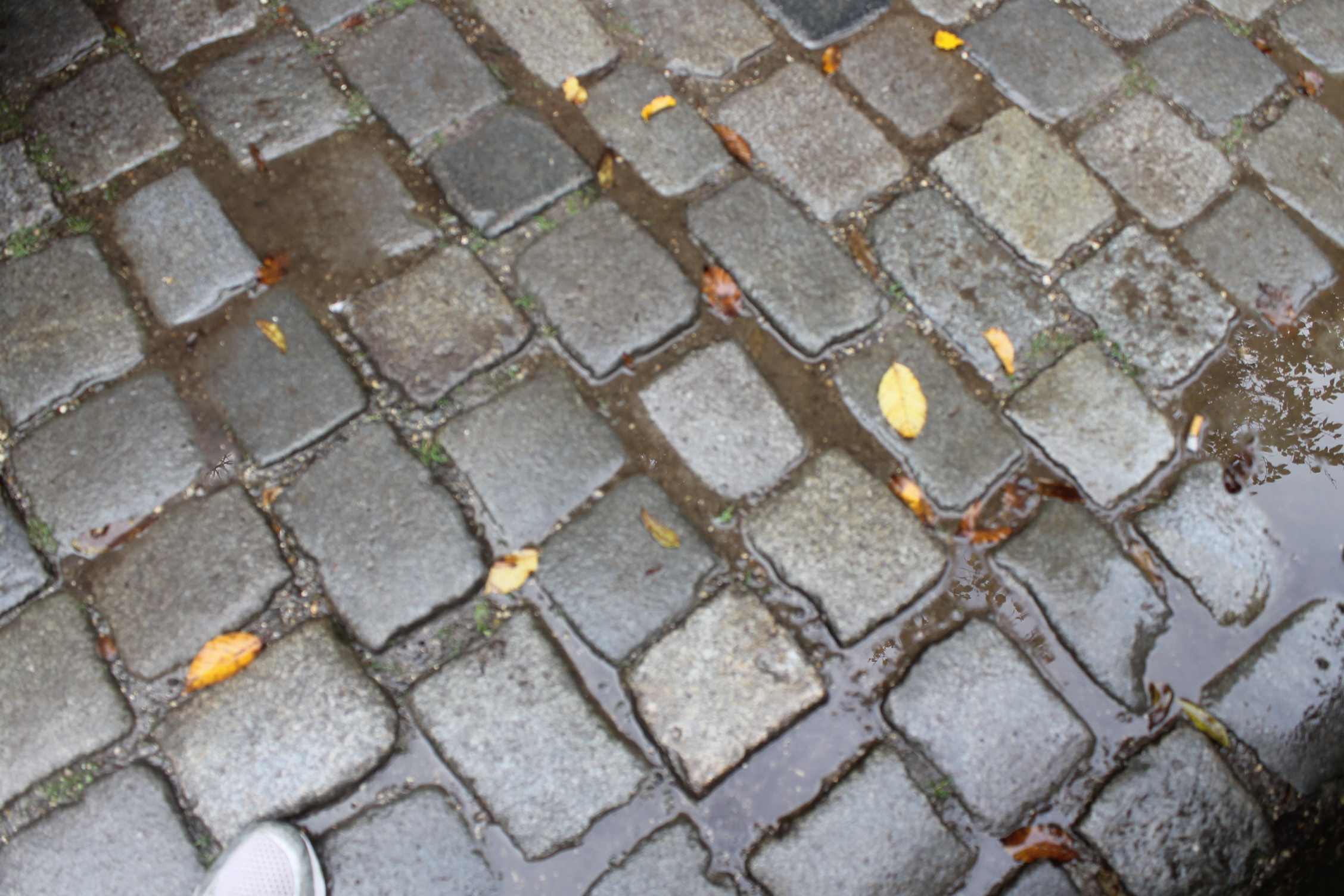 blauburen cobblestones.jpg