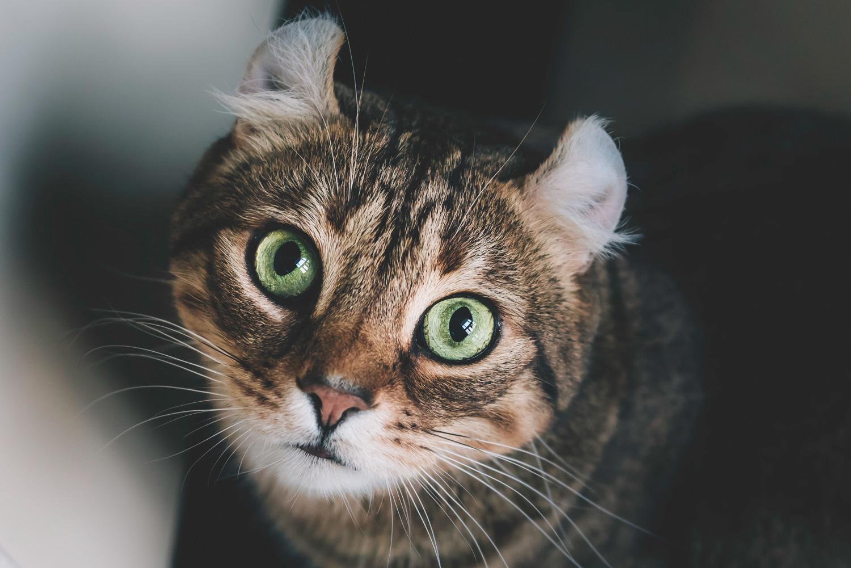 ottawa-pet-photographer-portraits-dog (9).jpg