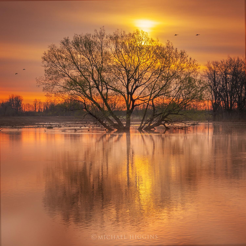 """Oak on a Floodplain"" - Michael Higgins"